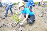 Planting more trees to protect the environment in Can Gio